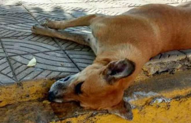 Pelo menos 35 cães são mortos em Parnamirim, Sertão de Pernambuco
