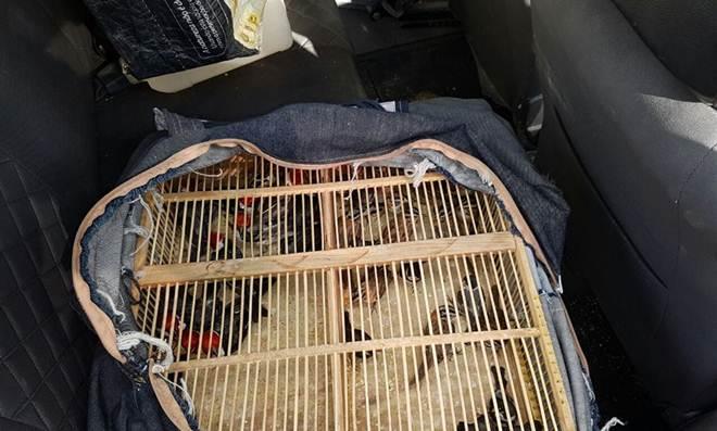 PRF prende traficantes de animais com 53 aves em Recife, PE