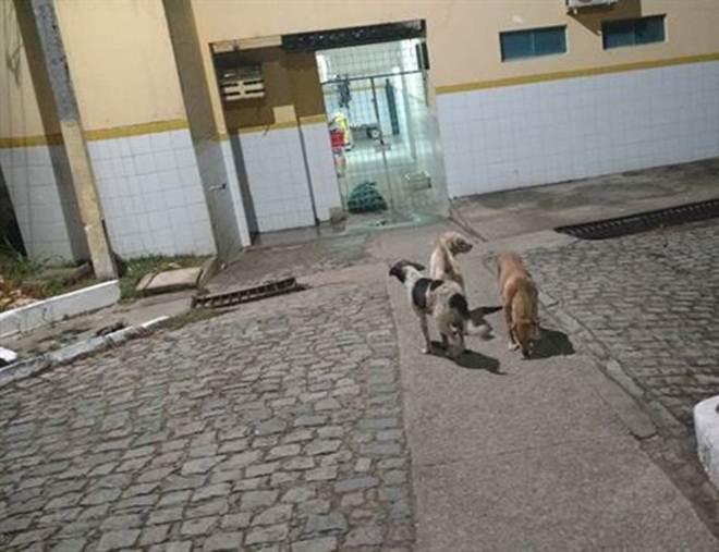 Cachorros esperam há meses por mulher que faleceu em hospital em Recife, PE