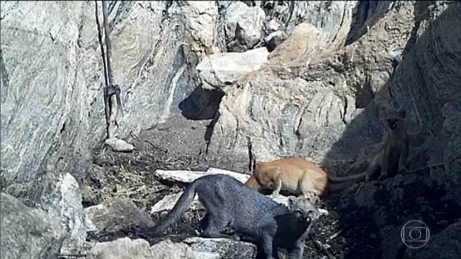 Em busca de água na seca, animais selvagens se aproximam de cidades em Pernambuco