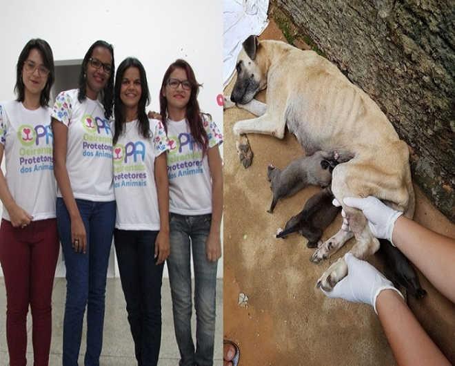 ONG realiza trabalho de proteção a animais que sofrem maus-tratos em Oeiras, PI