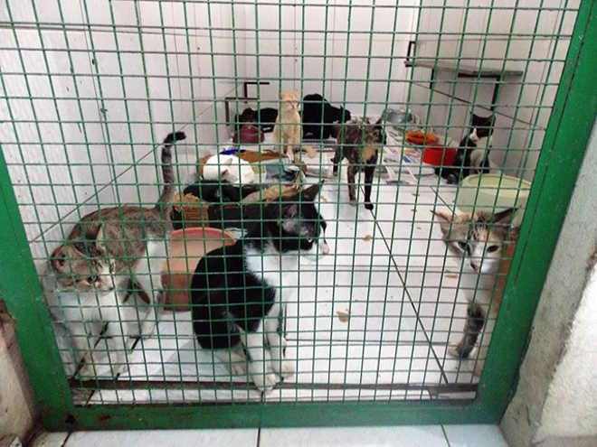 ONG em Teresina (PI) enfrenta graves dificuldades financeiras