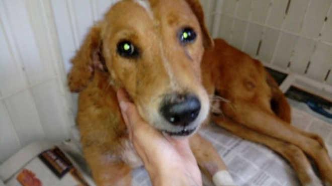 Após ser atingido por bala perdida, cão é resgatado e pode ser adotado