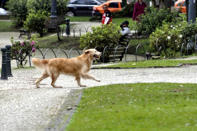 Parques de Curitiba (PR) podem ganhar espaço exclusivo para cães