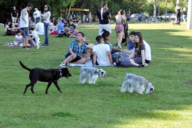 Vereadora propõe censo municipal de animais domésticos em Curitiba, PR