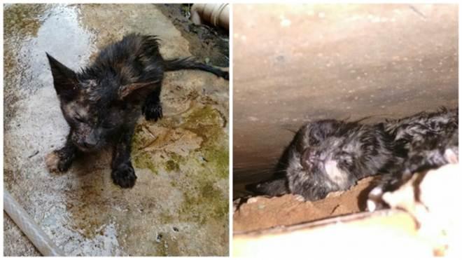 Bombeiros resgatam gato que ficou preso entre dois muros em Mandaguari, PR
