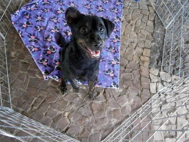 Mais animais são adotados durante a Feira de Adoção de Pinhais, PR