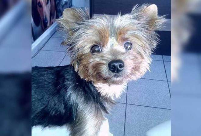 Cadela em tratamento é furtada em bairro de Ponta Grossa, PR