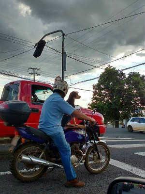Cachorro é transportado em moto e chama atenção em Ponta Grossa, PR