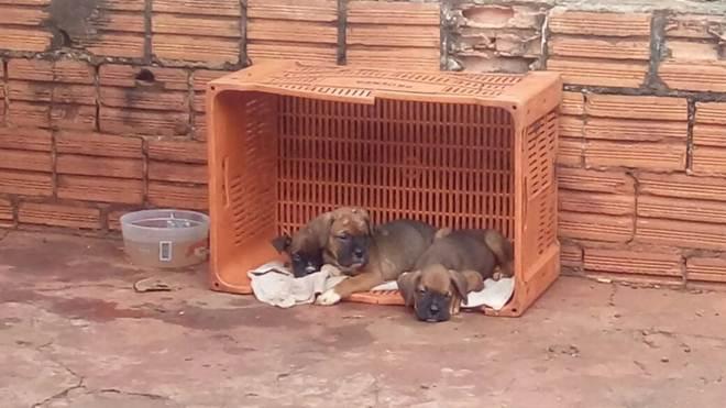 Homem que abandonou cachorros na rua será processado