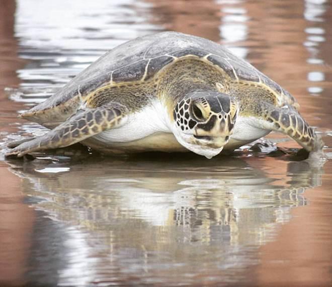Monitoramento encontra mais de 3 mil animais encalhados no litoral do Paraná