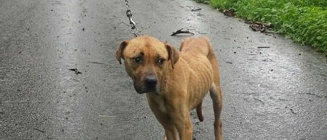 Portugal: Grupo de corrida encontra cadela abandonada e pede ajuda