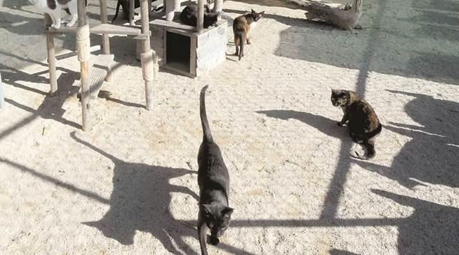 Veterinário municipal ajuda tutores de animais em Póvoa de Varzim, Portugal
