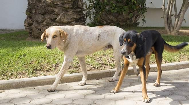 Esterilização gratuita para evitar o abandono animal em Vila Nova de Cerveira, Portugal