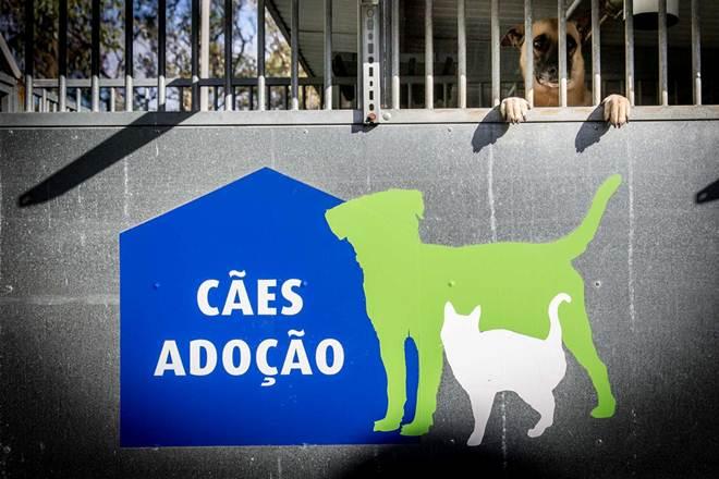 Portugal: A Casa dos Animais sem nome, sem tutor e sem raça