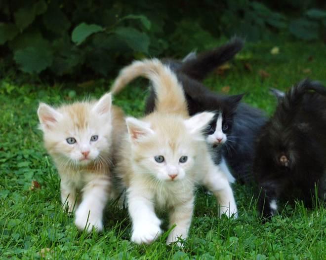 Cães e gatos vivem hoje mais dois anos do que há uma década