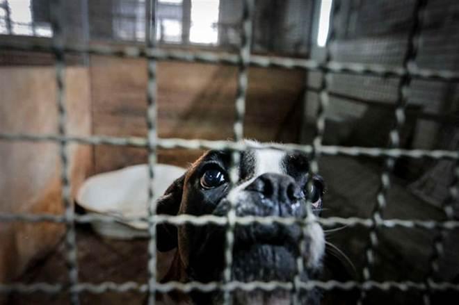 Presidente de Portugal promulga estatuto jurídico dos animais