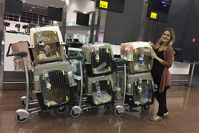 Família se muda para a Ásia e leva os seis animais de estimação