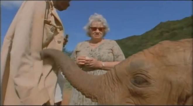 Conheça esta incrível mulher que devotou 50 anos de sua vida à criação de elefantes órfãos