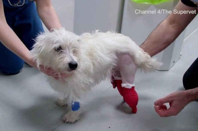 Cão abandonado ganha patinhas biônicas com tecnologia avançada