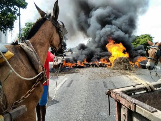 O que mudou um ano depois da lei que pune maus-tratos aos animais utilizados em carroças no RJ?