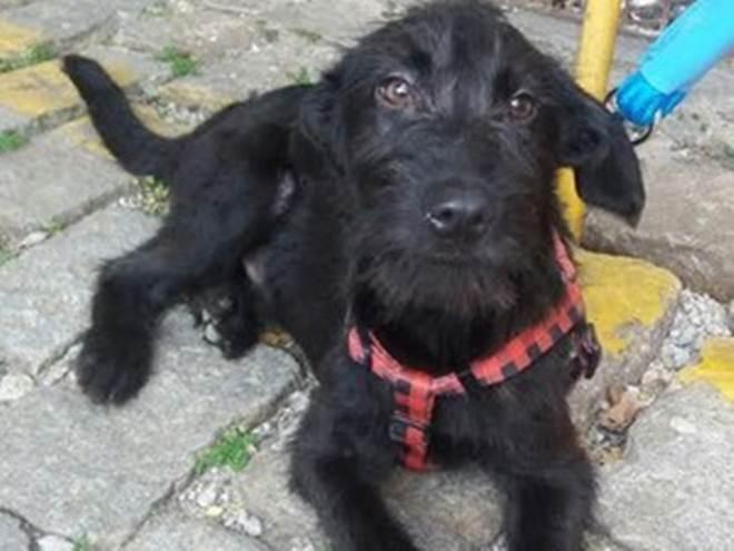 Feira em Petrópolis, (RJ) reúne cães e gatos para adoção neste sábado