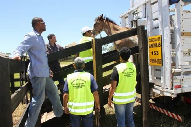 Governo reativa serviço para apreender animais soltos nas vias em São João da Barra, RJ