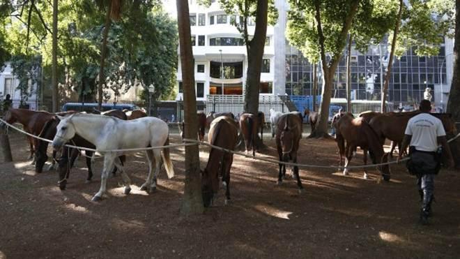 Cavalos de quartel da PM da Zona Oeste ficam pastando no Centro do Rio