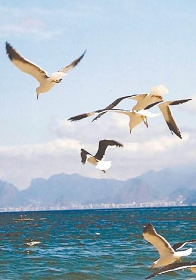 Luta para salvar aves que caem de fome no Rio
