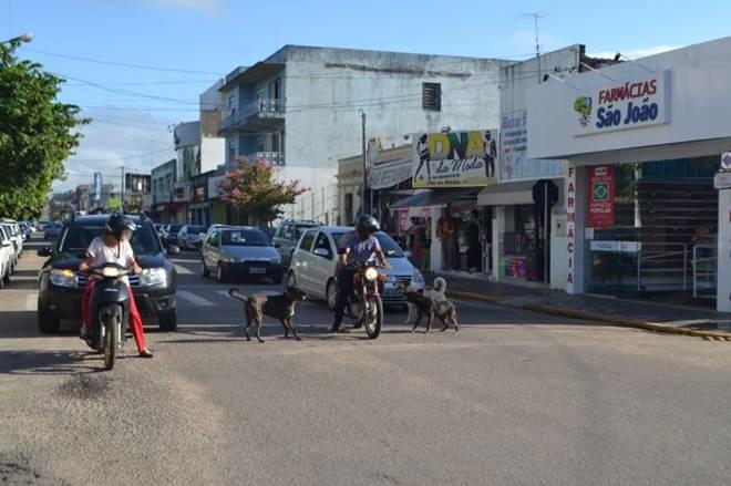 Apaca promete recolhimento imediato de cachorros em Camaquã, RS