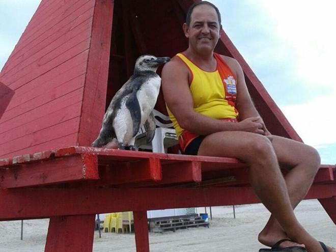 Pinguim encontrado em praia aceita carinhos e segue salva-vidas no RS