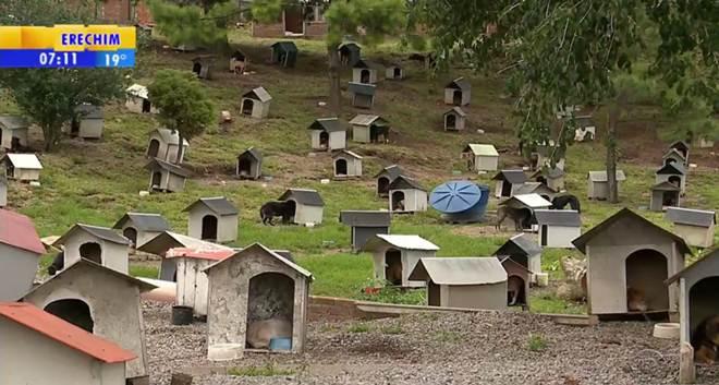 Defensores criticam condições de abrigo para animais em Caxias do Sul, RS