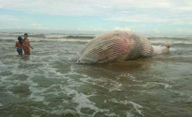 Baleia é encontrada morta em praia de Imbé, RS