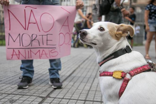 Ato defende manutenção de secretaria que defende direitos dos animais em Porto Alegre, RS