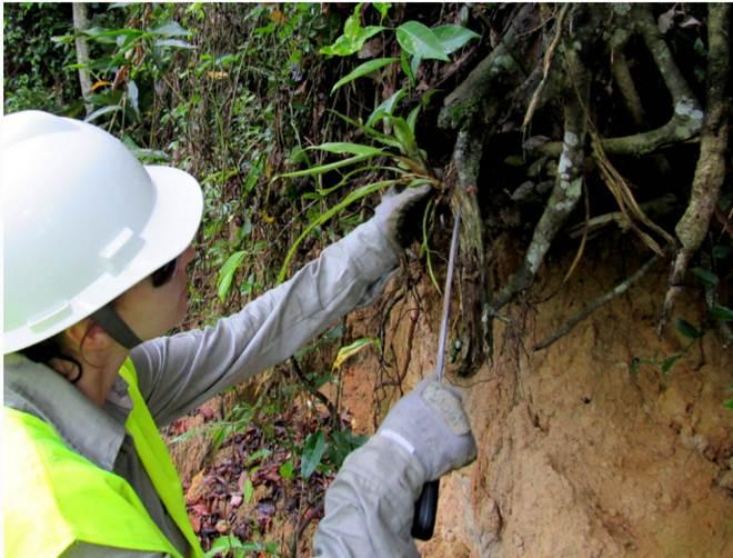 Começa o resgate de plantas e animais nas obras do contorno viário, em Biguaçu, SC