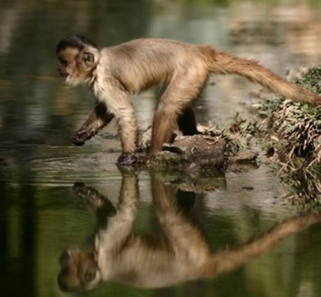 Ministério Público abre investigação para apurar supostos maus-tratos no Zoo do Beto Carrero