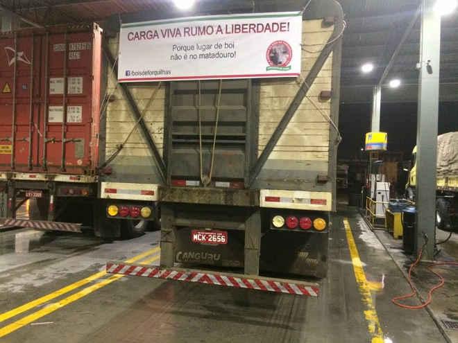 Caminhão de matadouro atravessa o Brasil com bois rumo à liberdade