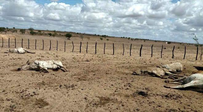 Fazendeiro deixa o gado morrer de fome em Sergipe
