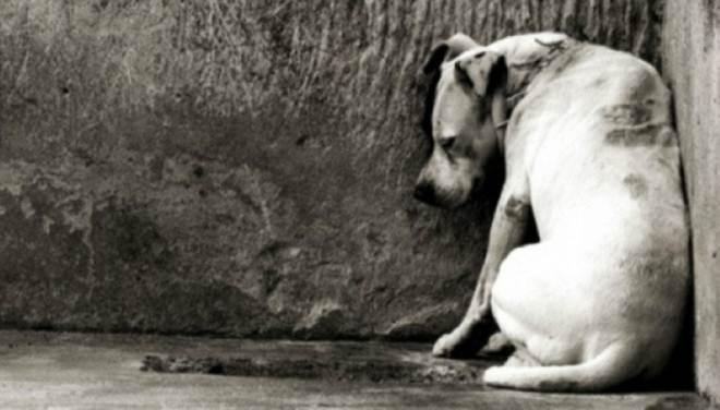 Prefeitura de Adamantina (SP) deverá recolher e abrigar cães e gatos e garantir veterinário gratuito