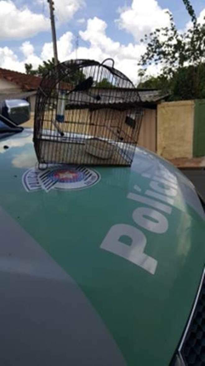 Polícia Militar Ambiental resgata pássaro mantidos ilegalmente em cativeiro em Echaporã, SP