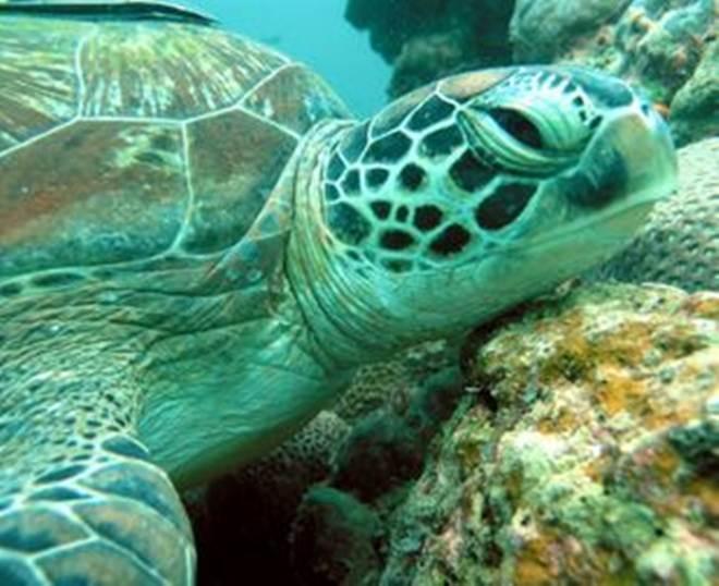 Tartarugas voltaram ao mar após meses de tratamento, em Guarujá, SP