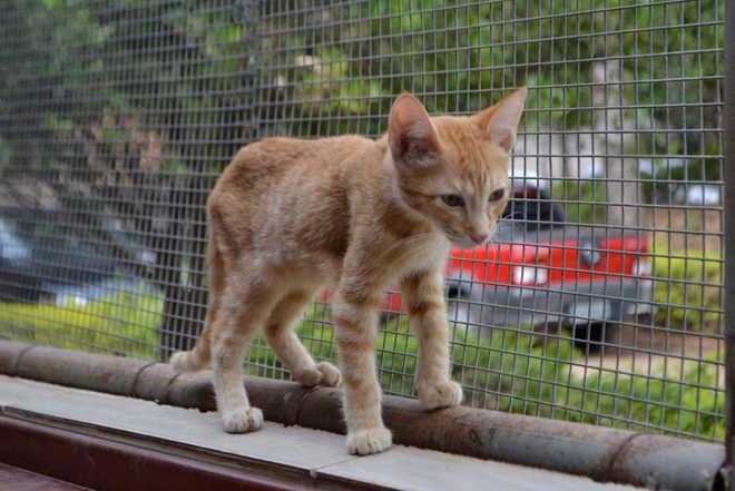 Hortolândia (SP) implanta setor de bem-estar animal