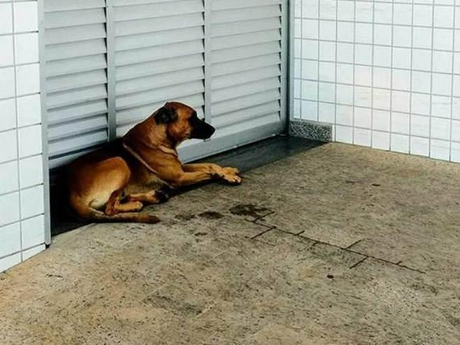 À espera do tutor, cão faz 'vigília' em frente a hospital em Limeira, SP