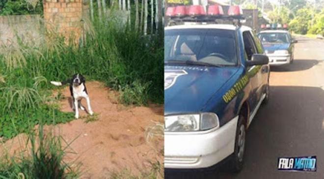 Após denúncia de maus-tratos, a Guarda Municipal se deslocou a Azul Ville, em Matão, SP