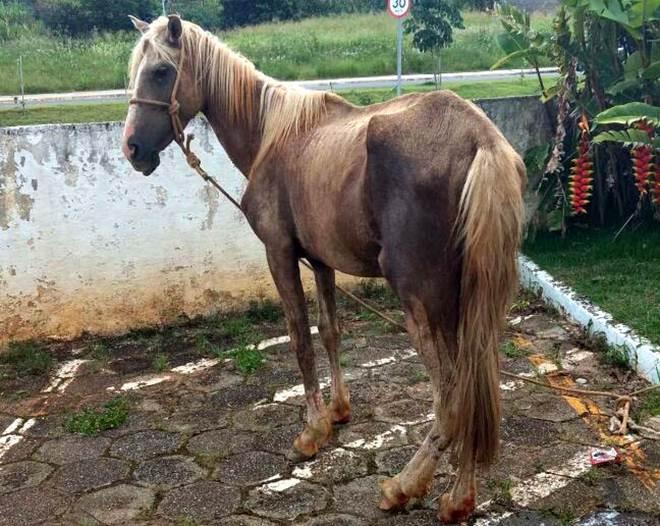 Dupla é flagrada rebocando cavalo com Kombi e autuada por maus-tratos em Pilar do Sul, SP