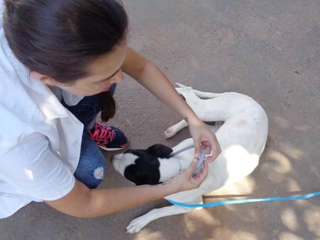 Animais doados pelo CCZ de Pres. Prudente (SP) ganham coleira repelente
