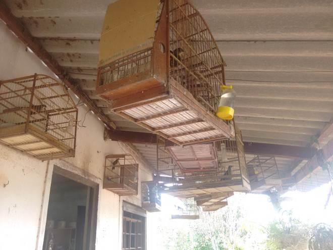 Polícia resgata pássaros mantidos ilegalmente em cativeiro em Queiroz, SP
