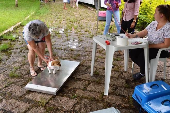 Mais de 250 animais são castrados em mutirão da Zoonoses de Salto, SP