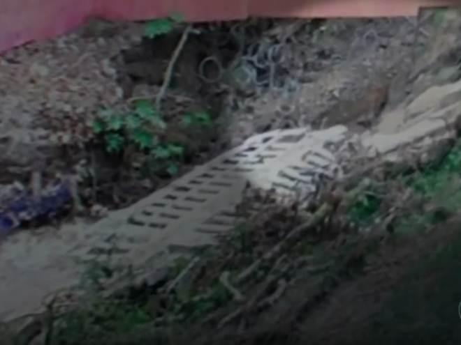 Onça é flagrada dentro de condomínio de casas em Salto, SP