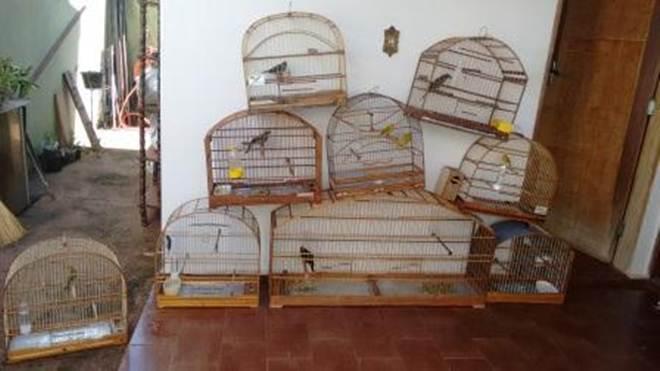 Polícia Ambiental resgata pássaros mantidos ilegalmente em cativeiro em Santa Cruz do Rio Pardo, SP